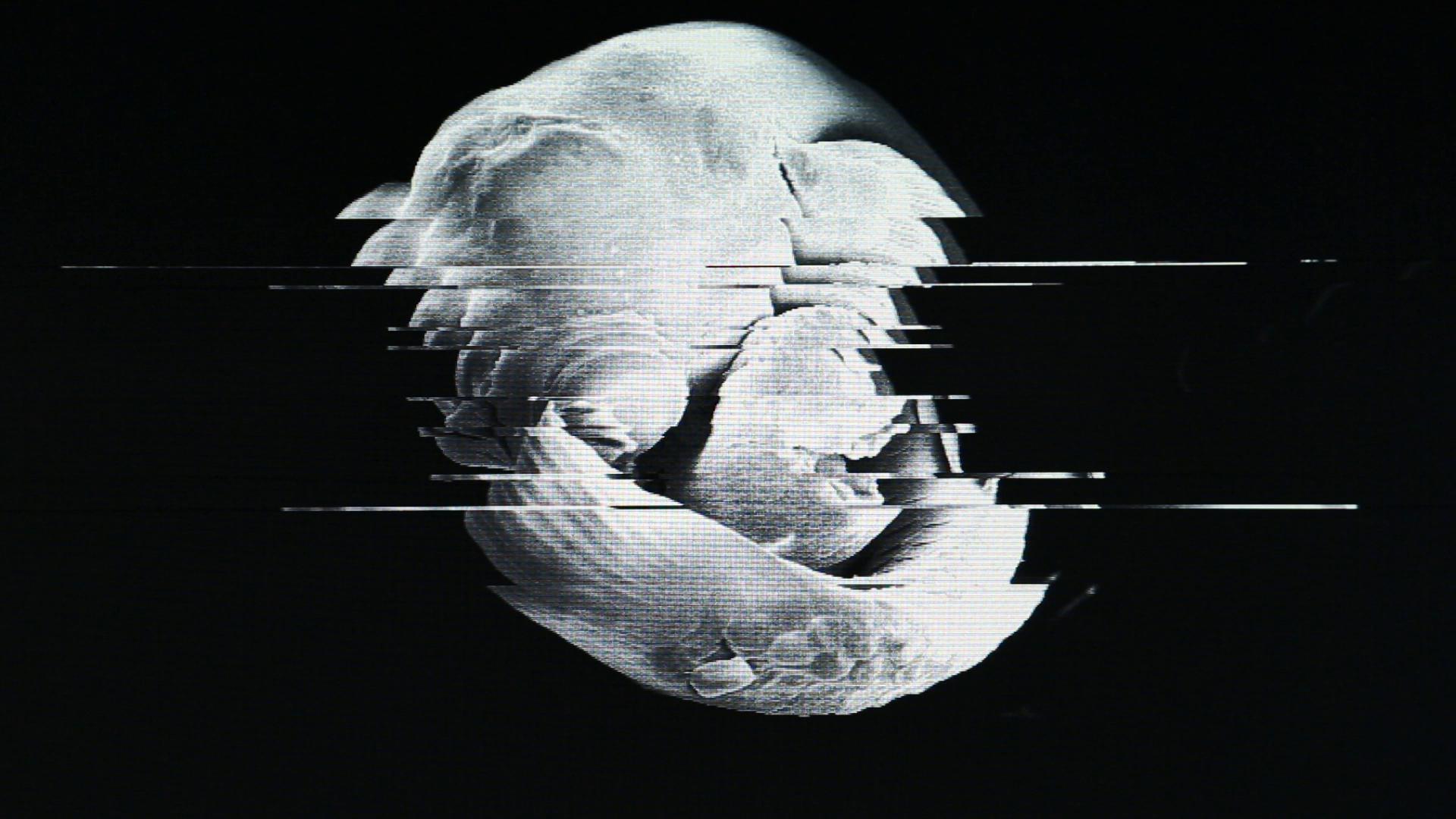 Nehring Video Kunstwerkt REM_Poeciliidae-I