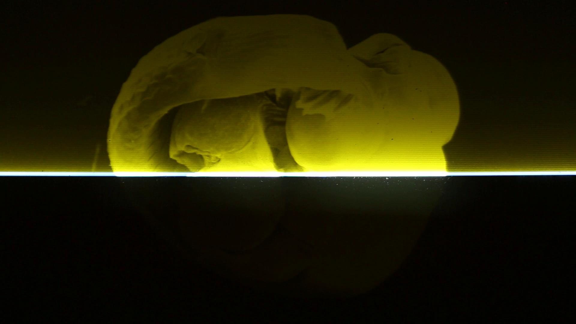 Nehring Video Kunstwerk REM_Poeciliidae-II