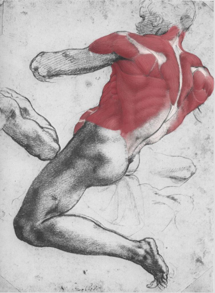 Daniel Nehring, Anatomische Zeichnung, Anatomie, Anatomy, Medizinische Illustration, Medical Illustration, Drawing, Digital Painting